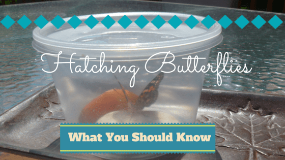 Hatching Butterflies